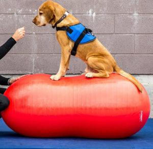 Peanut treningsball Denne peanøttformede ballen er designet for styrketrening av sportshunder, brukshunder og til opptrening i rehabiliteringsperiode. Fåes i ulike størrelser. Alle kommer med DVD og pumpe. 40 cm :kr. 700,- inkl. mva (NY TYPE) 50 cm: kr. 950,-inkl. mva(NY TYPE) 60 cm : kr. 1 200,- inkl. mva(NY TYPE) 70 cm : kr. 1 350,- inkl. mva 80 cm : kr. 1 600,- inkl. mva